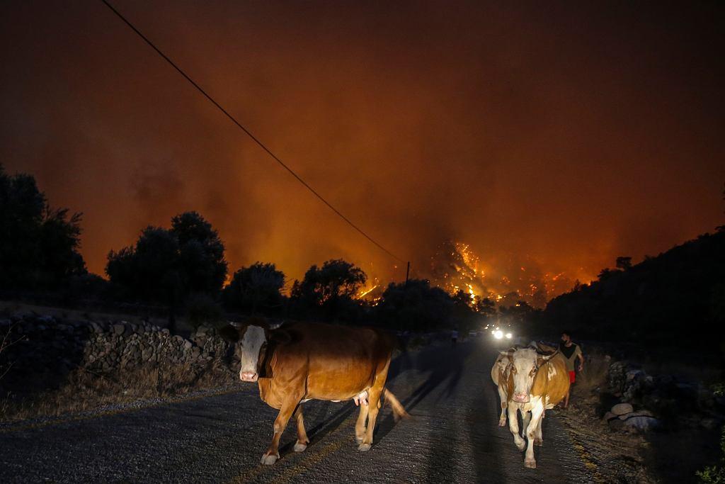 Turcja. Ewakuacja ludzi i zwierząt z wioski Cokertme niedaleko Bodrum, 2 sierpnia 2021 r.