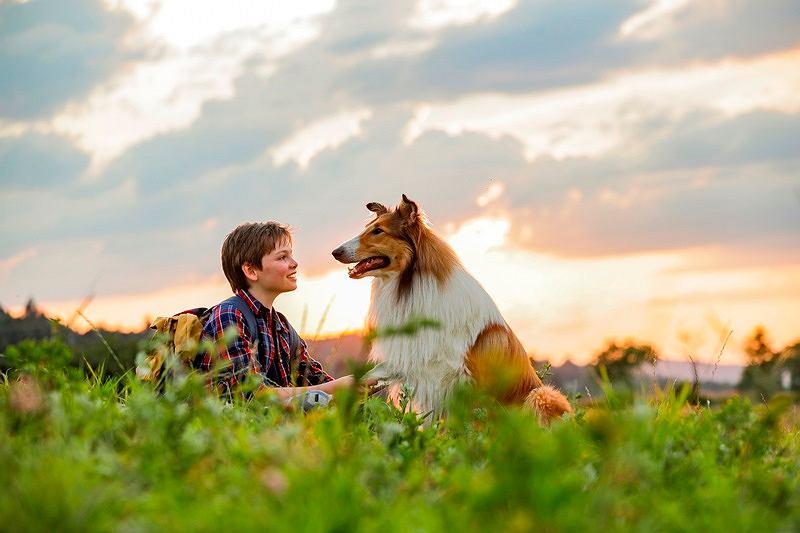 'Lassie, wróć!'