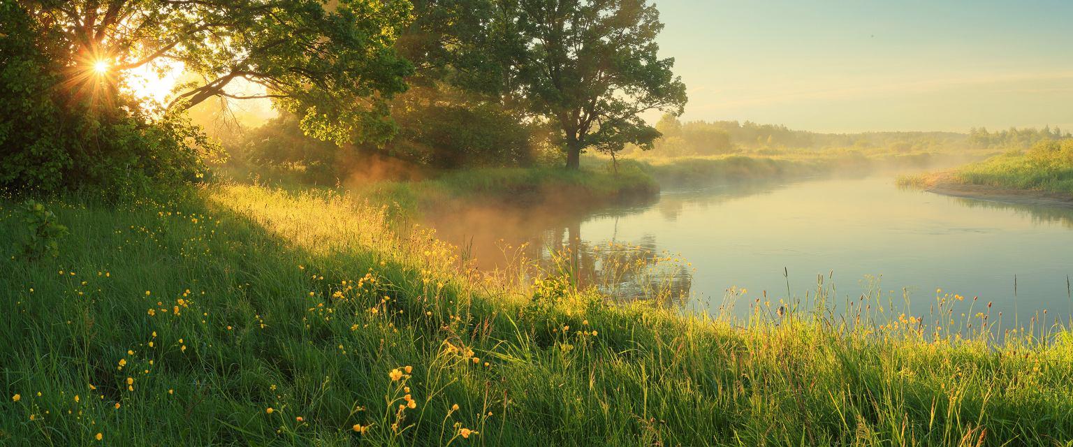 Wiele jadalnych dzikich roślin można spotkać na łąkach (fot. Shutterstock)
