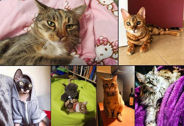Zdjęcie numer 0 w galerii - Karmel, Daktyl, Kapitan Benny, Ptyś, Wiesław... Kochane i piękne - oto Wasze koty [GALERIA NA DZIEŃ KOTA]