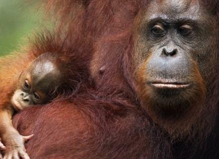 fot. naturepl.com / Anup Shah / WWF