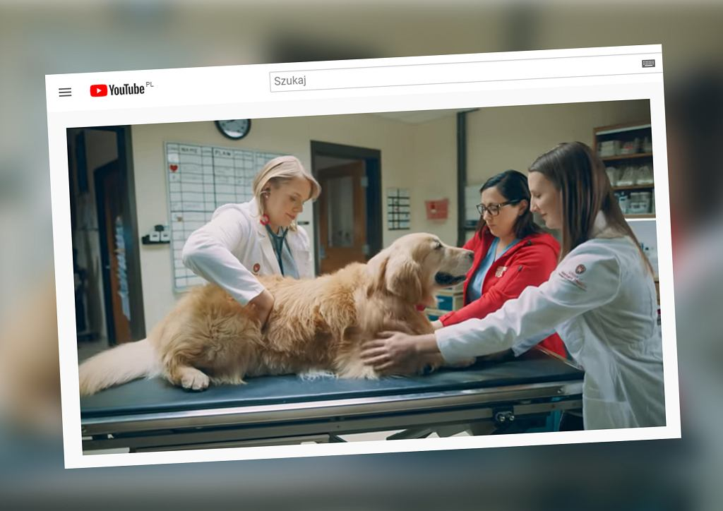 USA: Biznesmen wykupił reklamę na Super Bowl, by wesprzeć weterynarzy, którzy uratowali jego psa
