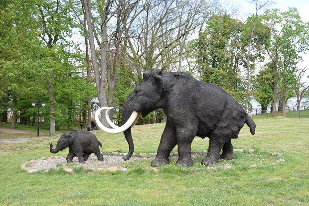 Rodzina mamutów z Alei Gwiazd Plejstocenu w Moryniu