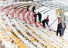 Stadion w Białymstoku na dzień przed meczem Jagiellonii z Pogonią. Śnieg, śnieg, śnieg... i odśnieżanie [ZDJĘCIA]