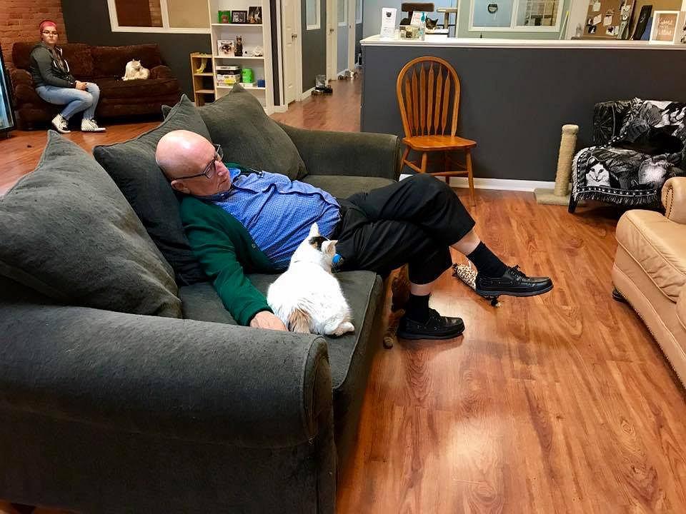 Staruszek codziennie śpi z podopiecznymi organizacji zajmującej się chorymi kotami