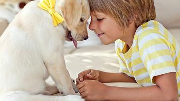 Pies dla dzieci powinien być łagodny, cierpliwy i opiekuńczy. Ten, który jest bezpieczny dla najmłodszych nie reaguje nerwowo na ich - często natarczywą i hałaśliwą - obecność.