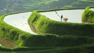Pola ryżowe w południowych Chinach / Animal Planet / PHIL CHAPMAN