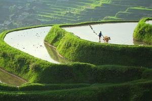 Podróż przez dzikie Chiny. Te zdjęcia powstawały przez 16 miesięcy
