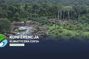 Co z lasami Amazonii? Niepokojące informacje z Brazylii tuż przed szczytem klimatycznym