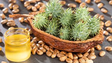 Olejek rycynowy - zbawienie dla twojej twarzy i włosów. Zdjęcie ilustracyjne