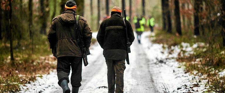Rozpoczęła się druga tura masowego odstrzału dzików na wschodzie kraju