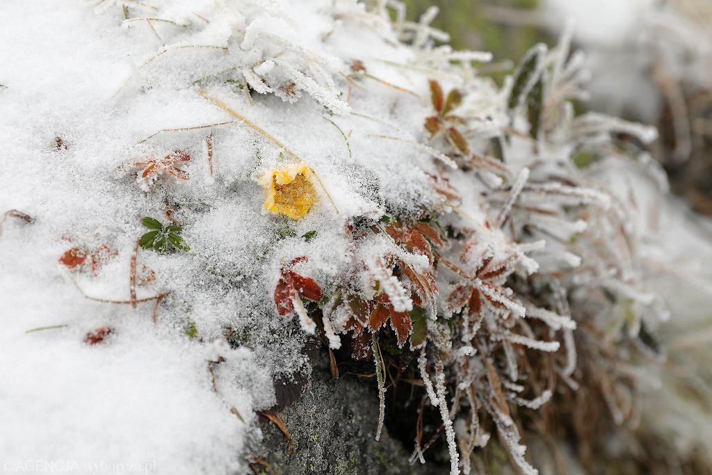 Długoterminowa prognoza IMGW na nadchodzącą zimę. Na zdjęciu: pierwszy śnieg tej jesieni, wrzesień 2019, Kasprowy Wierch