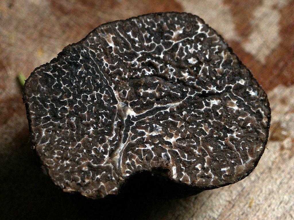 Trufle są bardzo wymagającymi organizmami. Grzyby te można znaleźć w określonych strefach klimatycznych, najczęściej na wilgotnych terenach