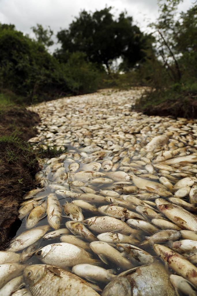 Rzekę Confuso trzeba będzie omijać przez jakiś czas |