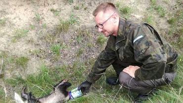 Leśniczy Artur Świder ratuje borsuka