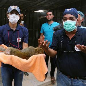 Interwencja w zoo Khan Younis w Gazie