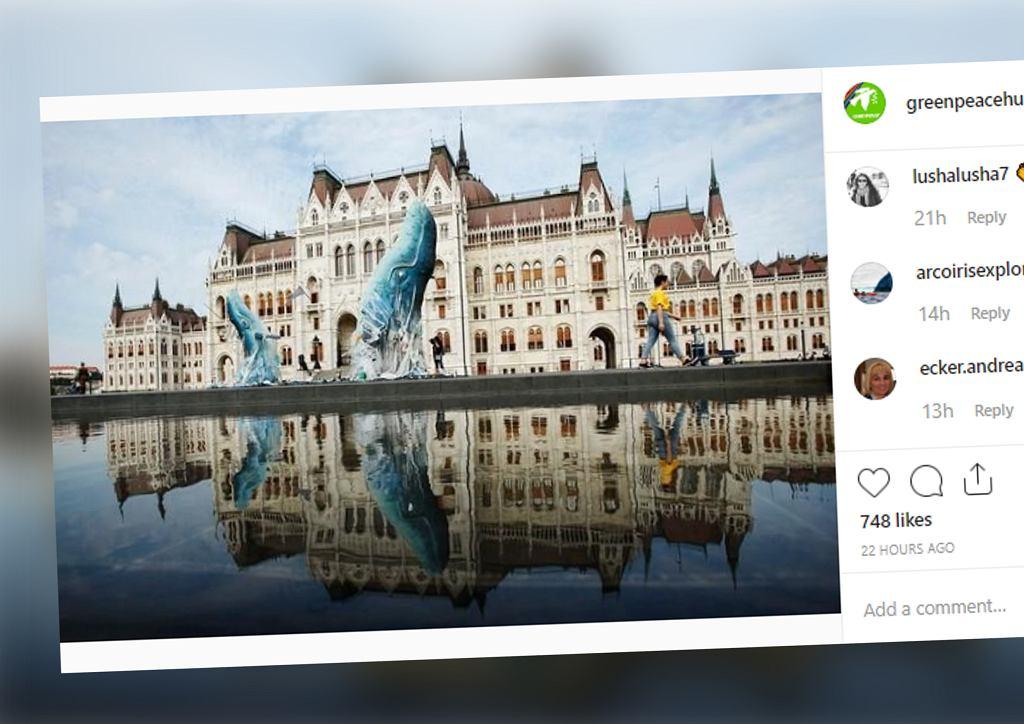 Węgry: Przed parlamentem stanęły dwa wieloryby. Niezwykła akcja Greenpeace