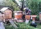 Stracił 2,5 mln pszczół w jeden dzień. Zbiera środki na nową pasiekę i chce edukować o pszczołach