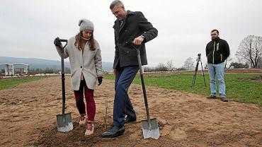 Kielce, 23 listopada 2018 rok. Prezydent Bogdan Wenta sadzi dąb w ogrodzie botanicznym przy ul. Karczówkowskiej