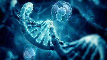 Nutrigenetyka - geny a żywienie człowieka