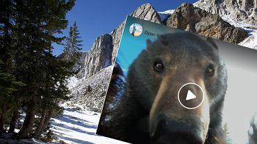 Niedźwiedź zrobił sobie selfie