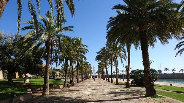 Słoneczna Majorka - jeden z lepszych kierunków na wakacje z dziećmi