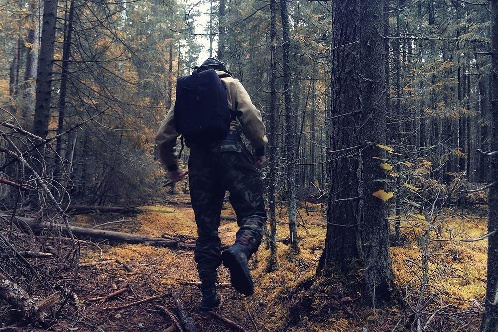 W Lasach Państwowych można będzie nocować na dziko