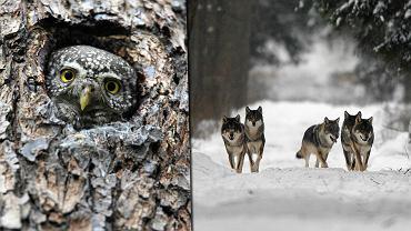 Zwierzęta z Puszczy Białowieskiej