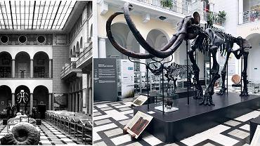 Szkielet Mamuta z Warszawskiego Muzeum Geologicznego