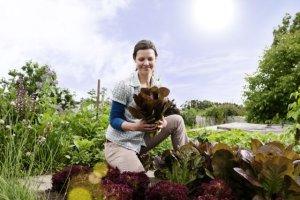 Rośliny użytkowe w ogrodzie ozdobnym