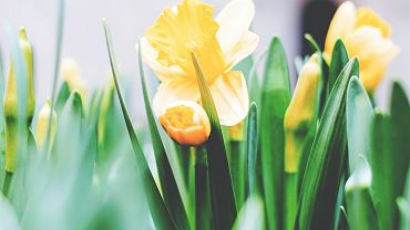 Pogoda na Wielkanoc 2021. Czy w święta będziemy cieszyć się wiosną? (zdjęcie ilustracyjne)