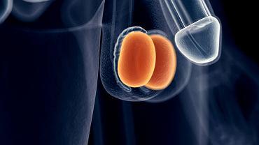 Czasami za ból jądra i podbrzusza odpowiada nowotwór. Ze względu na ryzyko rozwoju stanów patologicznych, zagrażających zdrowiu i życiu, utrzymujące się stany bolesności okolic intymnych należy zgłaszać lekarzowi rodzinnemu lub urologowi.