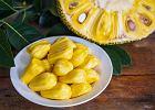 Jackfruit - właściwości, zastosowanie. Jak smakuje jackfruit