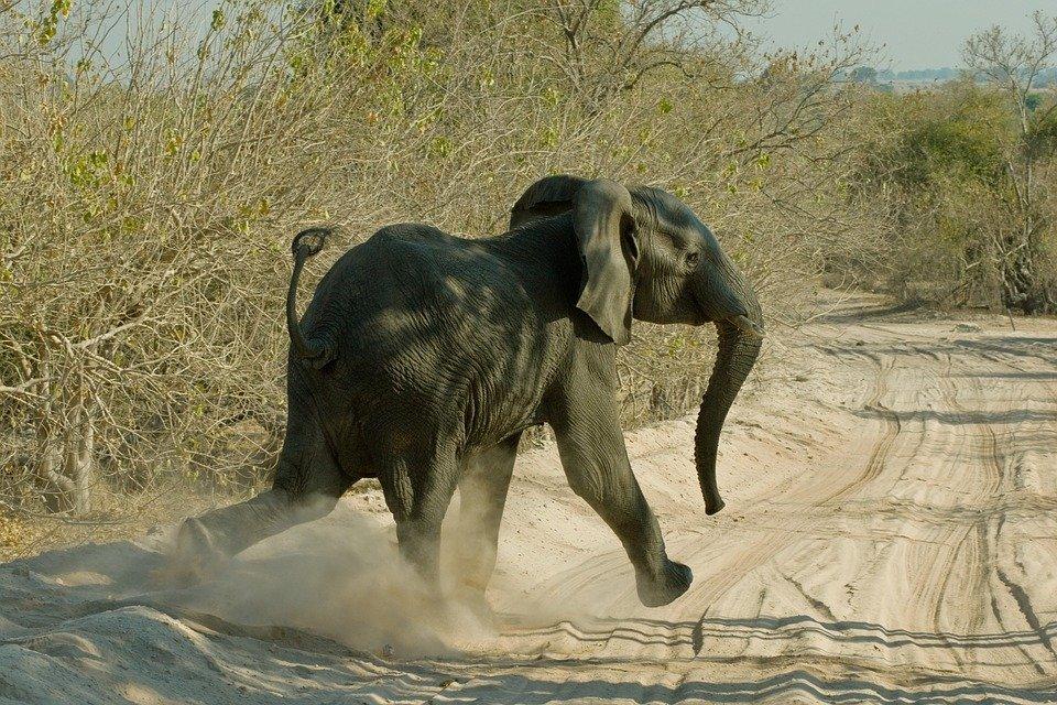 Słoń jaki jest, każdy widzi
