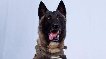 'K-9 Fighter' pies, który dopadł al-Bagdadiego