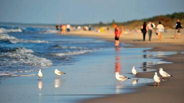 Plaże Mierzei Wiślanej są szerokie, morze płytkie, a woda w nim dość ciepła.