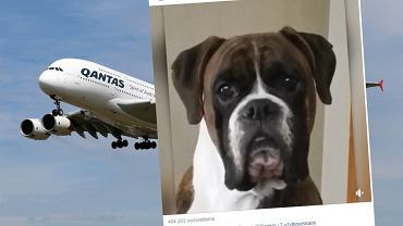 Pies nie przeżył podróży samolotem. Jego właścicielka wini linie lotnicze