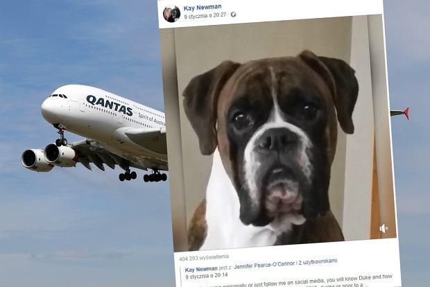 Australia: Leciała z psem samolotem. Po wylądowaniu okazało się, że zwierzę nie żyje