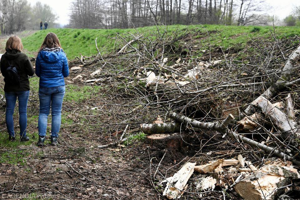 Deweloper Wykarczowal Drzewa Bez Pozwolenia Zaplaci Kare
