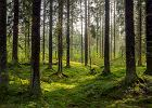 Las, przyroda nie tylko relaksują, ale również mają korzystny wpływ na zdrowie