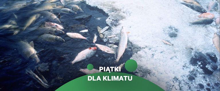 Zabijamy życie w oceanach. Ale może ono wrócić błyskawicznie