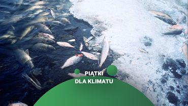 Zanieczyszczenia, rabunkowe rybołówstwo i kryzys klimatyczny zabijają życie w oceanach