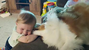 To nagranie pokazuje relację psa i dziewczynki.