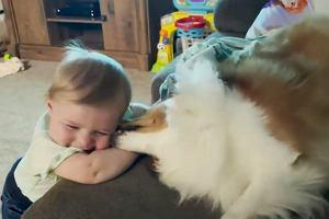 Ten pies, to najlepsza niania na świecie. Nagranie jest hitem w sieci