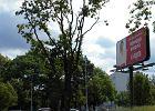 Okaleczyli drzewo, żeby billboard był lepiej widoczny [ZDJĘCIA]