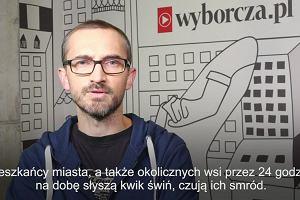 18 tys. świń ginie jednego dnia w ubojni w Kutnie. Marcin Wójcik opowiada o Jasiu Kapeli, który zatrudnił się w ubojni
