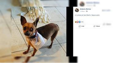 Meksykanin wysłał swojego psa do sklepu po chipsy.