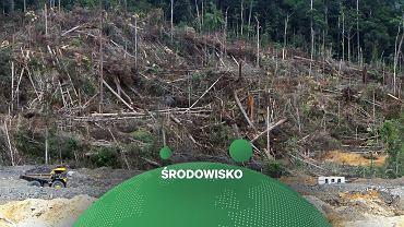 WWF: Chiny największym niszczycielem lasów deszczowych. Za nimi UE [RAPORT]