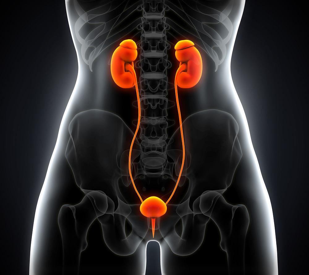 Cystoskopia to badanie stosowane w urologii, uroginekologii oraz nefrologii. Nazwa pochodzi od greckich słów oznaczających pęcherz (kystis) oraz skopein, czyli oglądać.