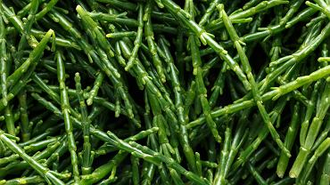 Soliród to roślina, która oprócz walorów smakowych ma wiele cennych składników odżywczych
